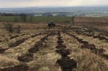 Peat tree planting rules introduced