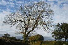 Councils urged to complete latest APSE ash dieback survey