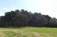 Sudden oak death discovered in Birmingham's Lickey Hills Country Park