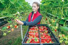 Top UK Fruit Producers 2020 - 21 - 25