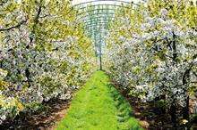 Horticulture Week Business Award - Top-Fruit Grower of the Year