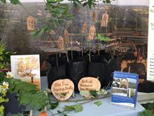 British Hardwood Tree Nursery donates young oaks for Lincoln Cathedral roof restoration in 100 years