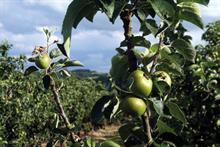 Top UK Fruit Producers 2018 - Key market trends