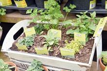 Greenest Garden Centre - Winner: B&Q