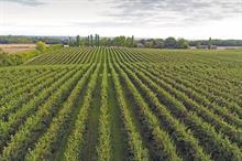 Top UK Fruit Producers 2021 - 6 - 10