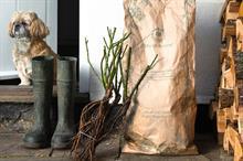 David Austin Roses promotes bare root benefits