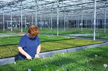How are labour shortages likely to impact ornamental growers in 2019?