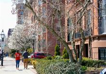 Focus on tree health preservation vital to address higher mortality of urban trees