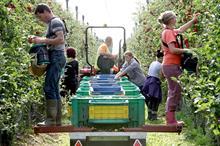 Top UK Fruit Producers 2021 - 11 - 15