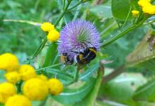 Coventry University citizen science research reveals bees' favourite plants