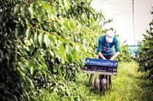 Top UK Fruit Producers 2021 - 21 - 25