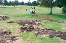 Bayer launches chafer grub/leatherjacket biological control