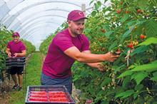 Top UK Fruit Producers 2020 - 11 - 15