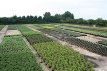 Grow: Off-the shelf or custom-mixed, Levington Advance