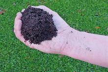 Compost tea: how compost tea helps crops resist disease attacks