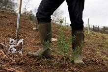 """Scotland """"smashes"""" tree planting targets with five-sixths of UK total"""