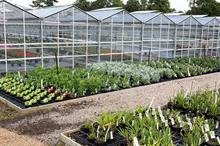 Brexit: Ornamentals production