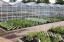 Winners and losers in horticulture this week