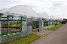 What do ornamentals and landscaping sectors want the Government to do to give horticulture a £13bn boost?