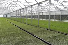 Protected Cropping Structures - Polytunnels