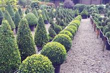 Kit options for topiary