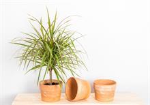 Top six houseplants named