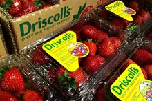 Driscoll's claims copyright infringement against rival strawberry breeder
