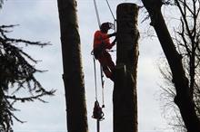 Arboriculture consultant launches West Midlands training centre