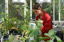 DCF invests in the future of plant health
