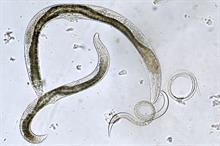 Bionema granted UK patent for nematode pest control kit