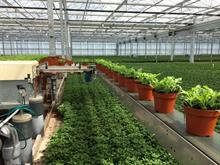 Fargro and Hortec partner to bring automation to UK growers