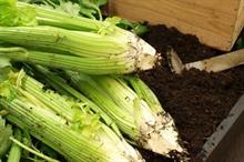 """Waitrose brings back """"forgotten"""" British winter veg for Christmas"""
