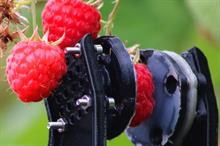 What practical steps are being taken to automate fruit picking?
