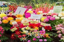 RHS Rosemoor's popular Garden Flower Show returns after a year's gap