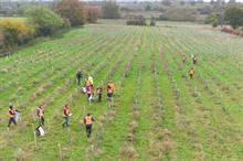 Ground Control funds planting of 15,000 saplings near Chelmsford
