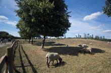 London,  Mudchute Park and Farm,  Mudchute Association