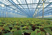 Smarter growing under glass