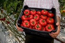 Asda to trial extra-sweet UK-bred beefsteak tomato