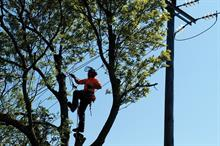 Top 30 UK Arboriculture Businesses 2019: 1 - 10