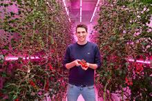 Five learnings for growing tomatoes in a vertical farm