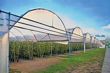 Top UK Fruit Producers 2021 - 1 - 5