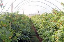 Top UK Fruit Producers 2020 - 1 - 5