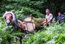 Horses recruited the remove trees from park woodland