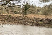 Floods spread invasive species to new areas, warns Property Care Association