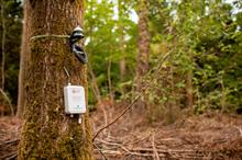 Defra and Forest Research use IoT sensors to monitor tree growth