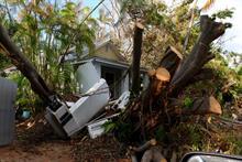 UK arborists to provide emergency help in wake of Hurricanes Irma and Maria