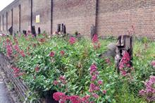 Horticulture Week Custodian Award - Best urban parks team