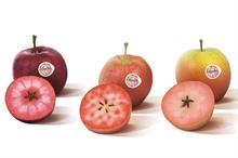 """New red-fleshed apple range """"to go global in next five years"""""""