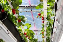How Dutch research is developing more sustainable glasshouse growing