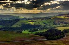 """New """"de-risking"""" grant scheme bringing back woodland planting, says Confor"""